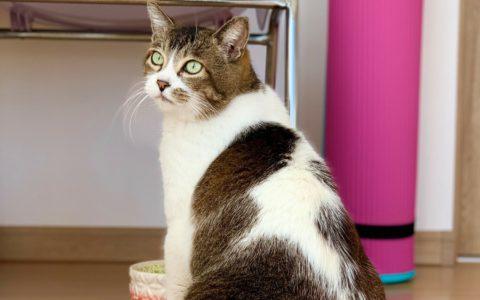 adoptioncat1