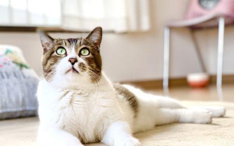 adoptioncat2