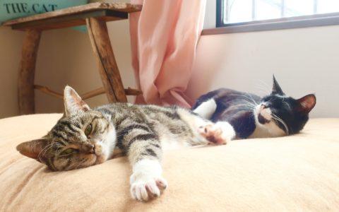 adoptioncat5