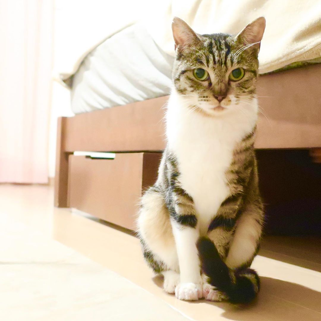 里親募集中猫