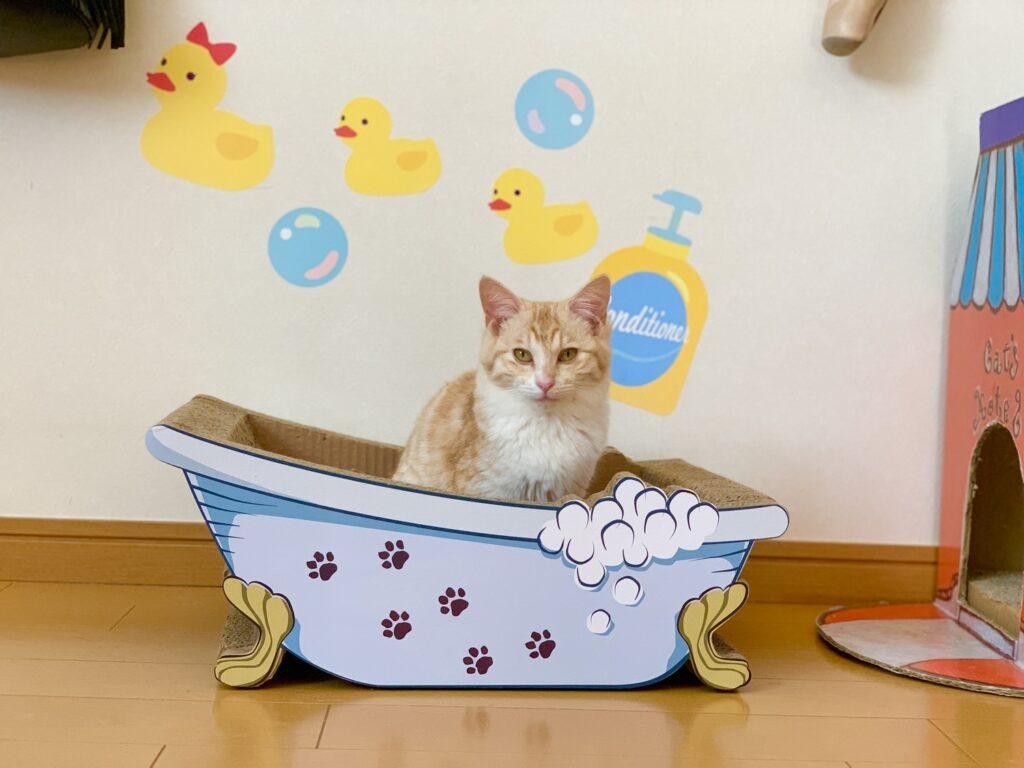 バスタブ猫