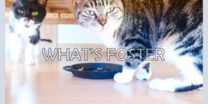猫の一時預かりボランティア